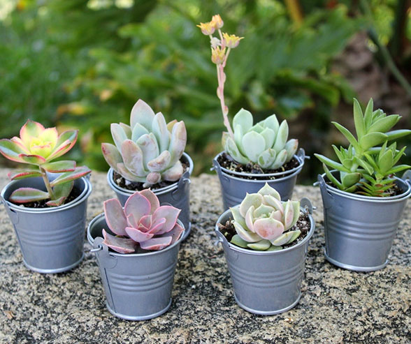 Small plants as wedding favors
