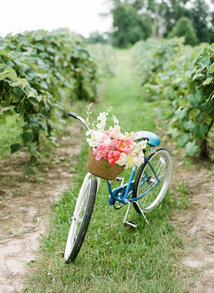 blue beach cruiser with flowers in basket
