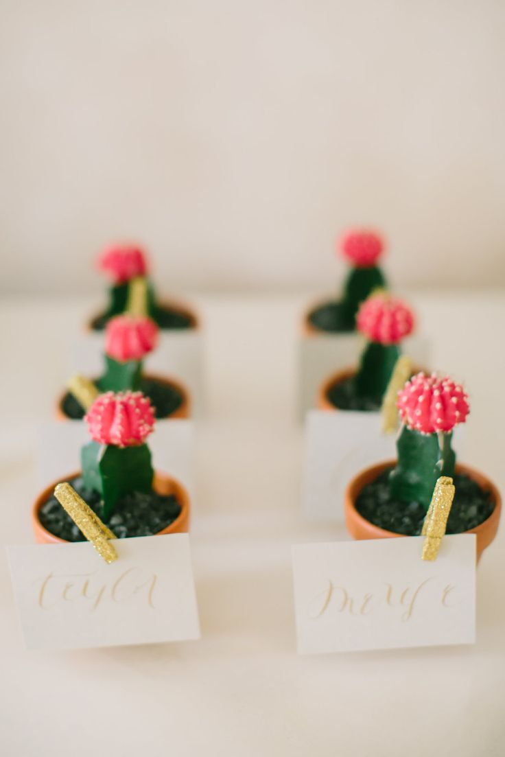 mini cacti favors