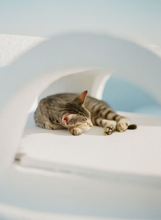 cat-sleeping-in-santorini http://itgirlweddings.com/santorini-honeymoon-inspiration/