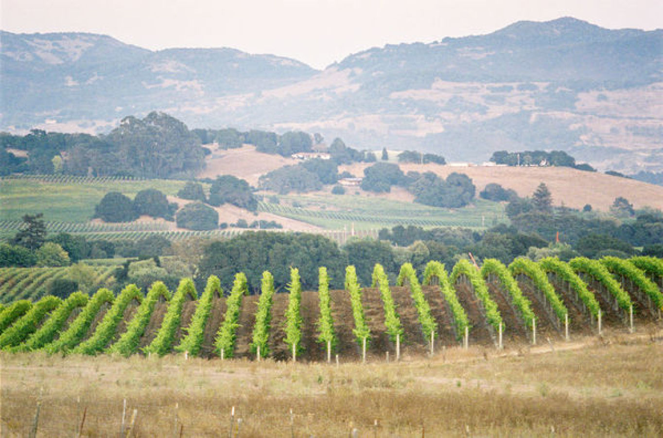 napa valley view from carneros inn of a vineyard http://itgirlweddings.com/modern-napa-valley-wedding/