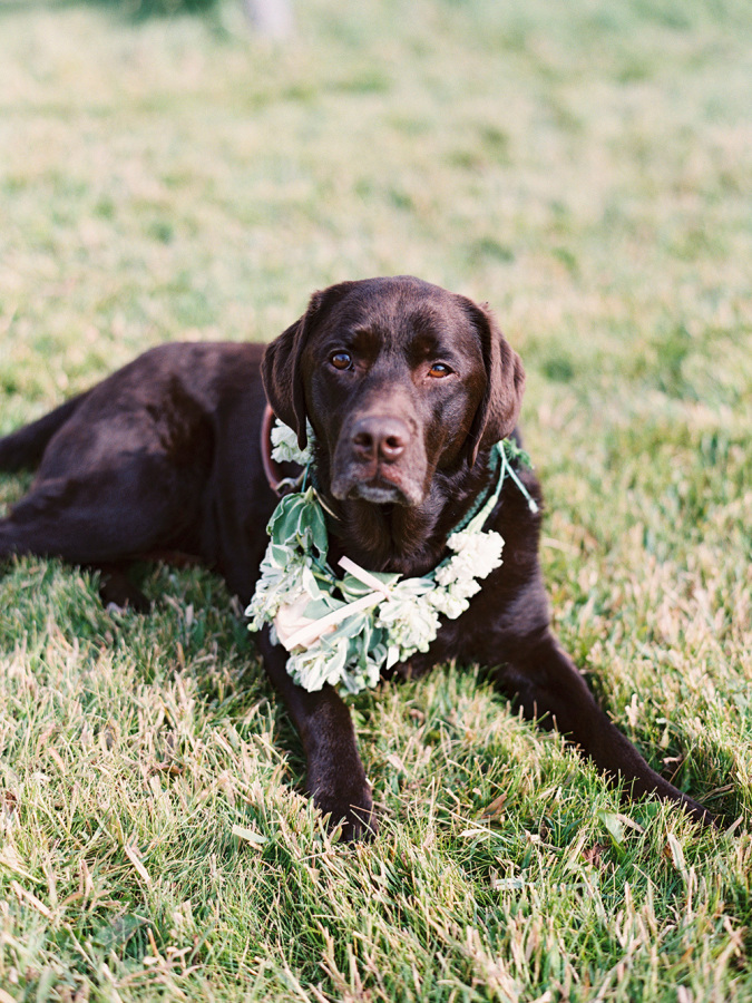 dog with white floral halo http://itgirlweddings.com/romantic-mountain-wedding/
