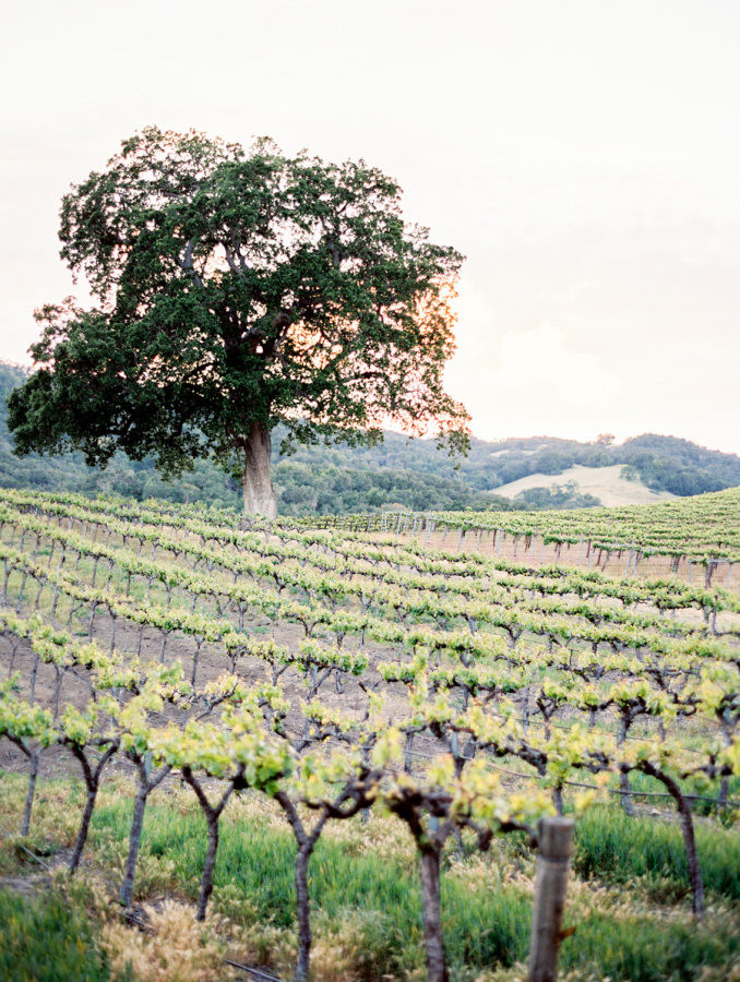 vineyard napa valley wedding http://itgirlweddings.com/pretty-vineyard-wedding/