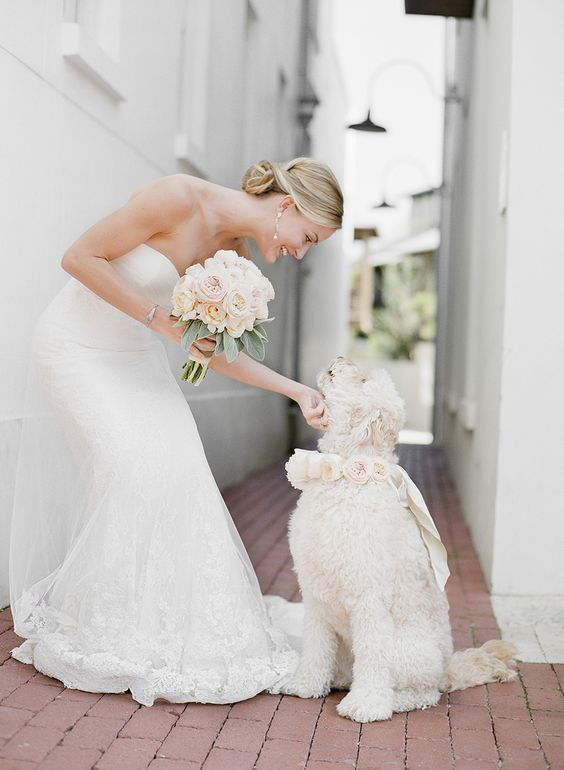 bride rubbing dog with rose collar